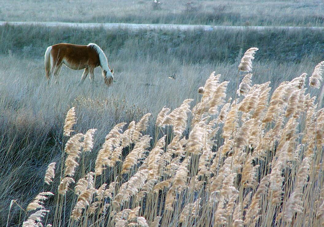Лошади на Меганоме